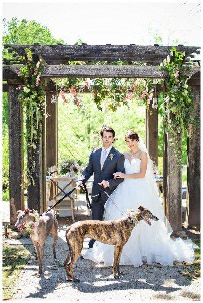 bride-groom-dogs