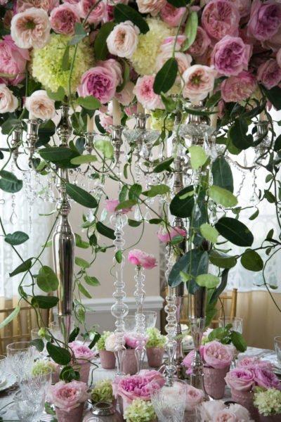 david-austin-roses-atlanta